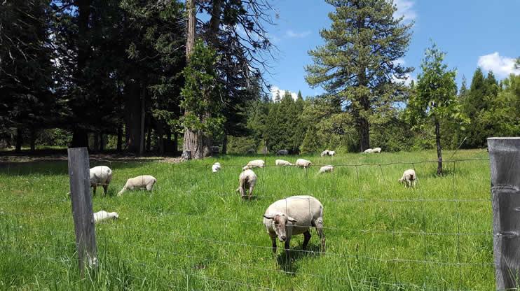 Emsoff Livestock Company - Chilcoot, California